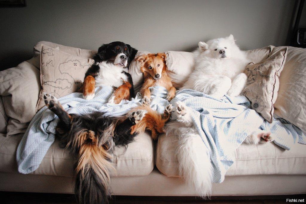 Картинка животные отдыхают