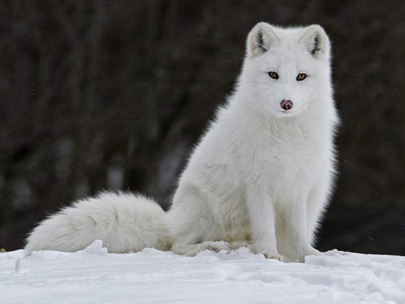 Самые красивые животные мира фото и названия и редкие