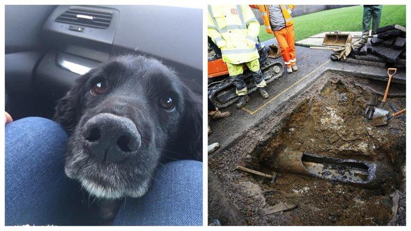 Пёс нырнул в трубу в погоне за кроликом и застрял