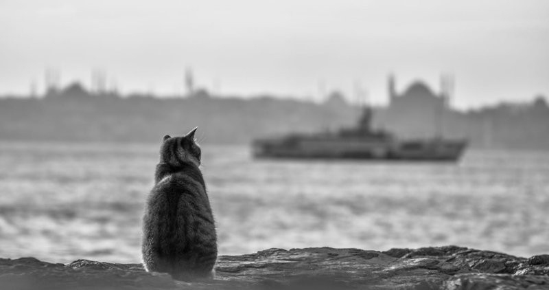 Картинки по запросу кошки стамбула