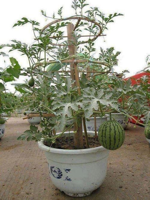 Ну и просто фото красивого урожая. Умеют же люди дача, идеи, интересное, посевная, советы, хитрости