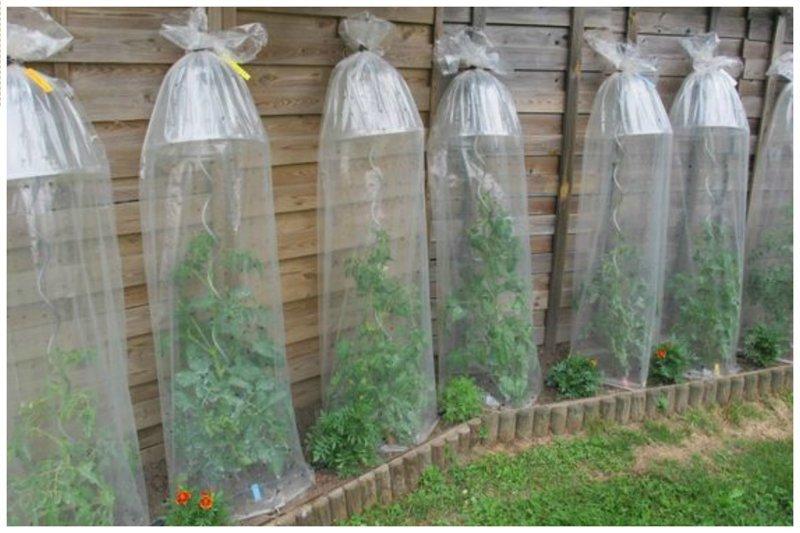 Удобно для вьющихся растений - и тепло и влага дача, идеи, интересное, посевная, советы, хитрости
