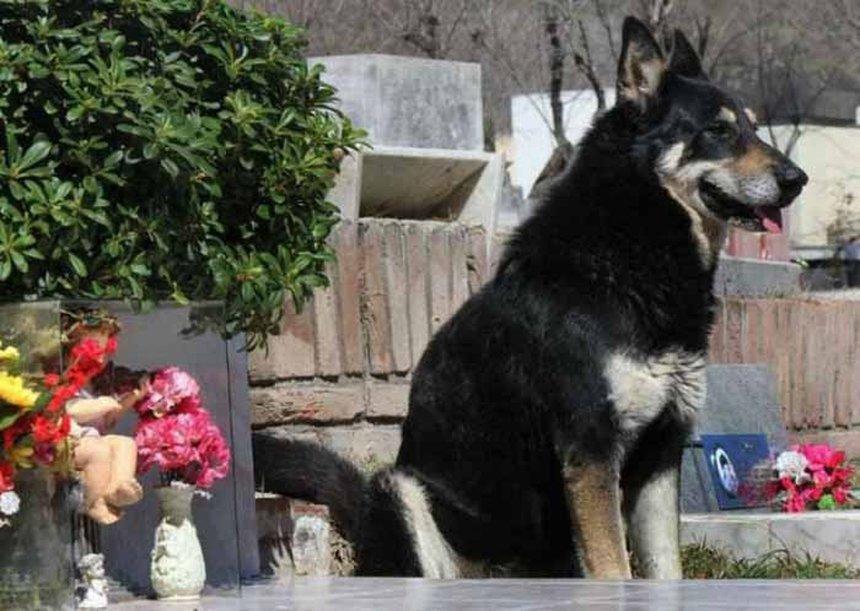 спастись этом пес хаски на могиле хозяина история автобусов Краснодар Махачкала