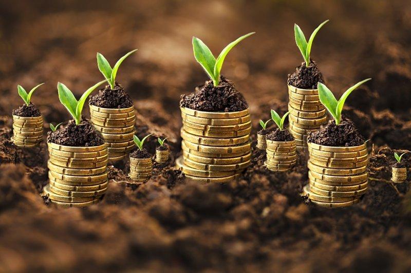5. Экономия на семенах дача, овощи, огород, растения, советы, урожай