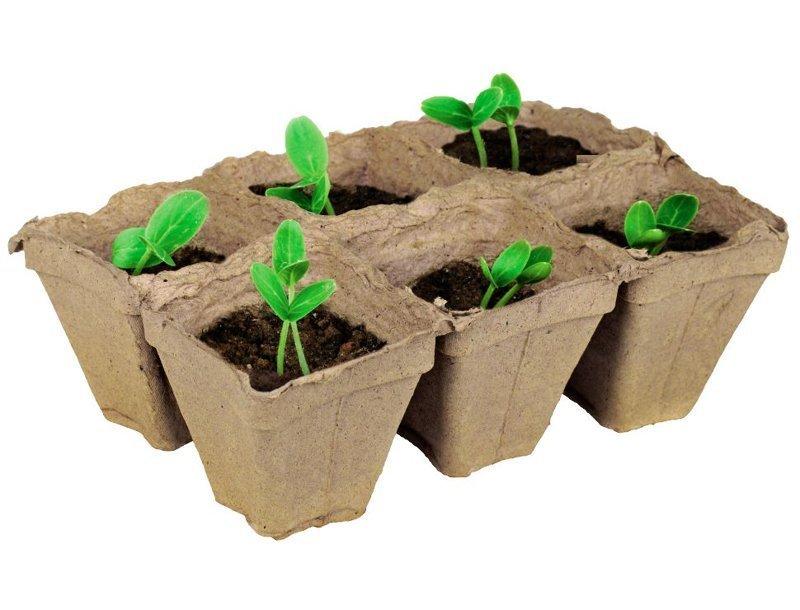 2. Тара для посадки рассады дача, овощи, огород, растения, советы, урожай