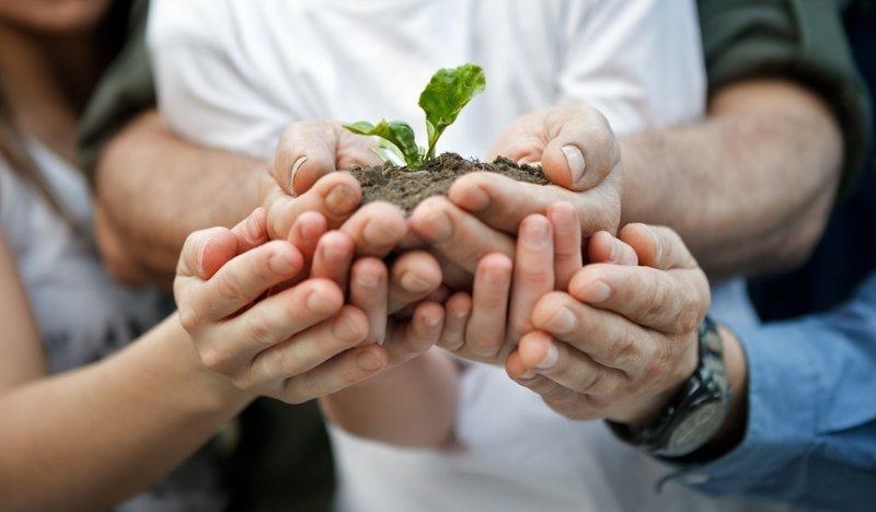 10. Запоздалая пикировка дача, овощи, огород, растения, советы, урожай