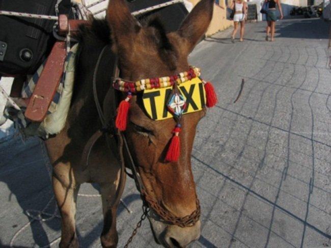 5-9 Хамгийн өвөрмөц 10 такси