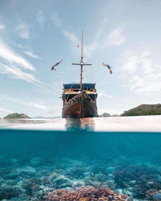 Прыжок с корабля день, животные, кадр, люди, мир, снимок, фото, фотоподборка