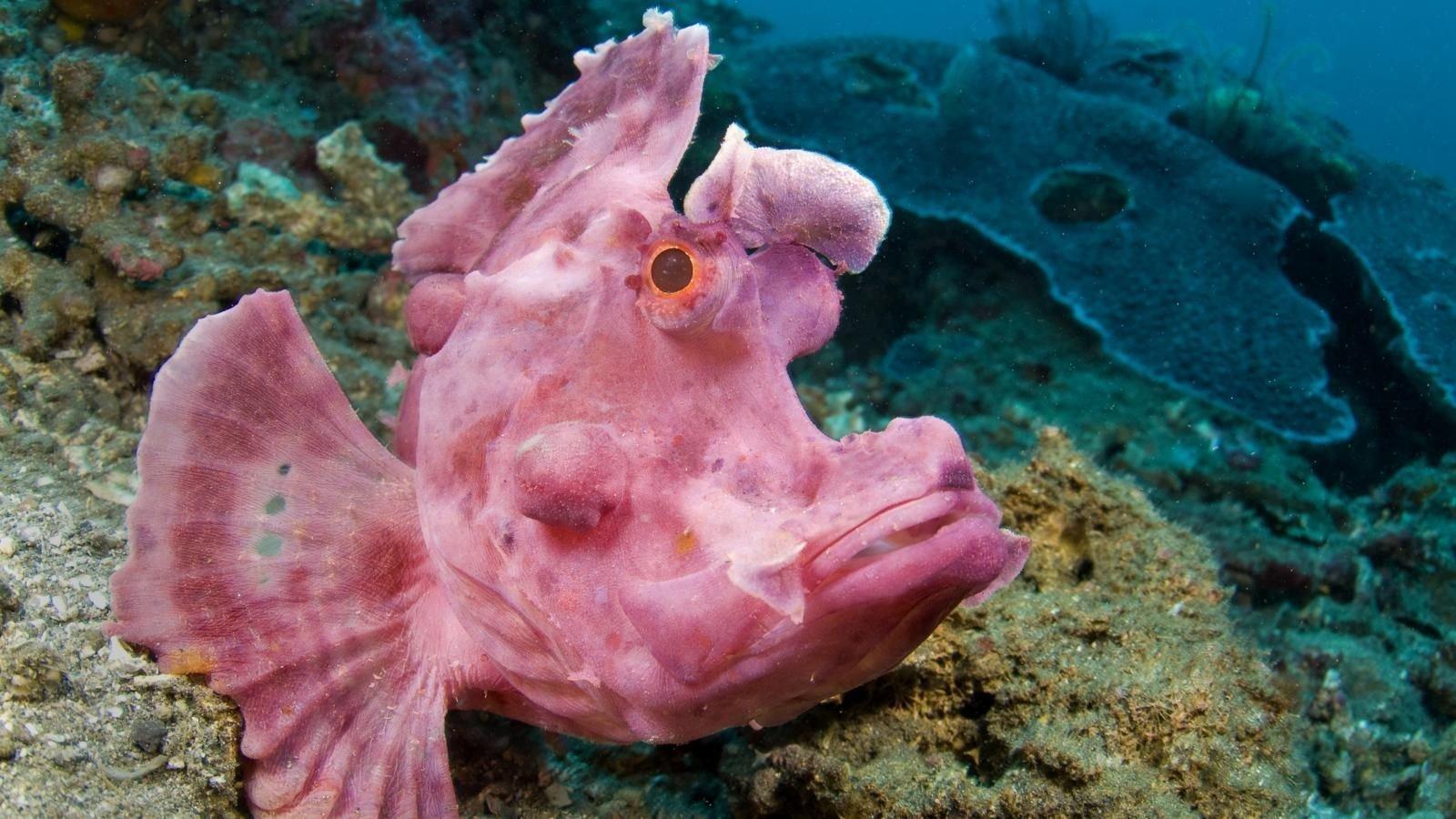 Угорь фото рыба растровом формате