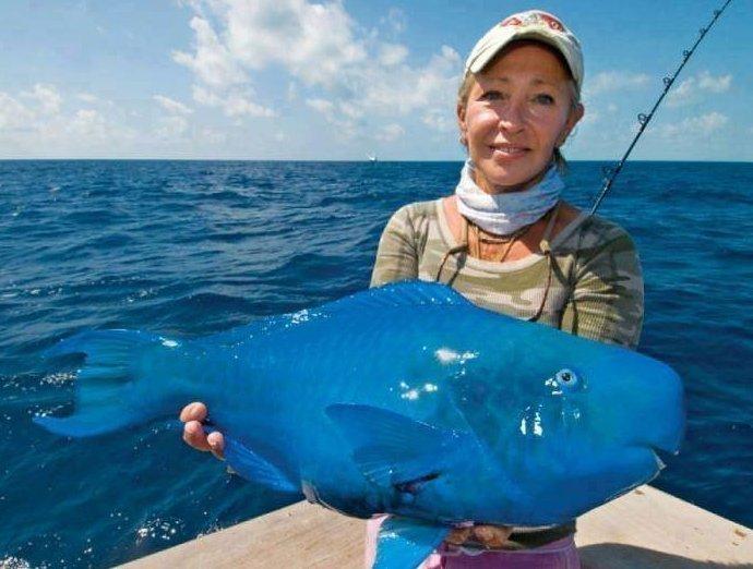 Рыба синий окунь или синий попугай встречается на мелководных рифах в тропических и субтропических районах Атлантического океана и Карибского моря. животные, природа, странные, удивительное, чудо