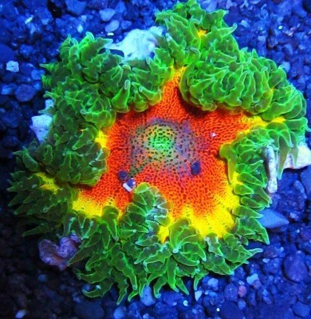 Это не цветы. Это  морской анемон  хищное беспозвоночное животное, лишенное скелета, которое живет под водой животные, природа, странные, удивительное, чудо