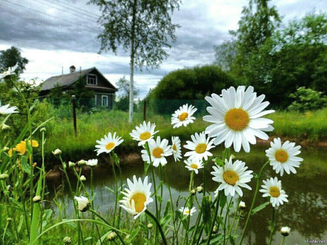 красивые картинки гифки лето ромашки сериацию, доступные для