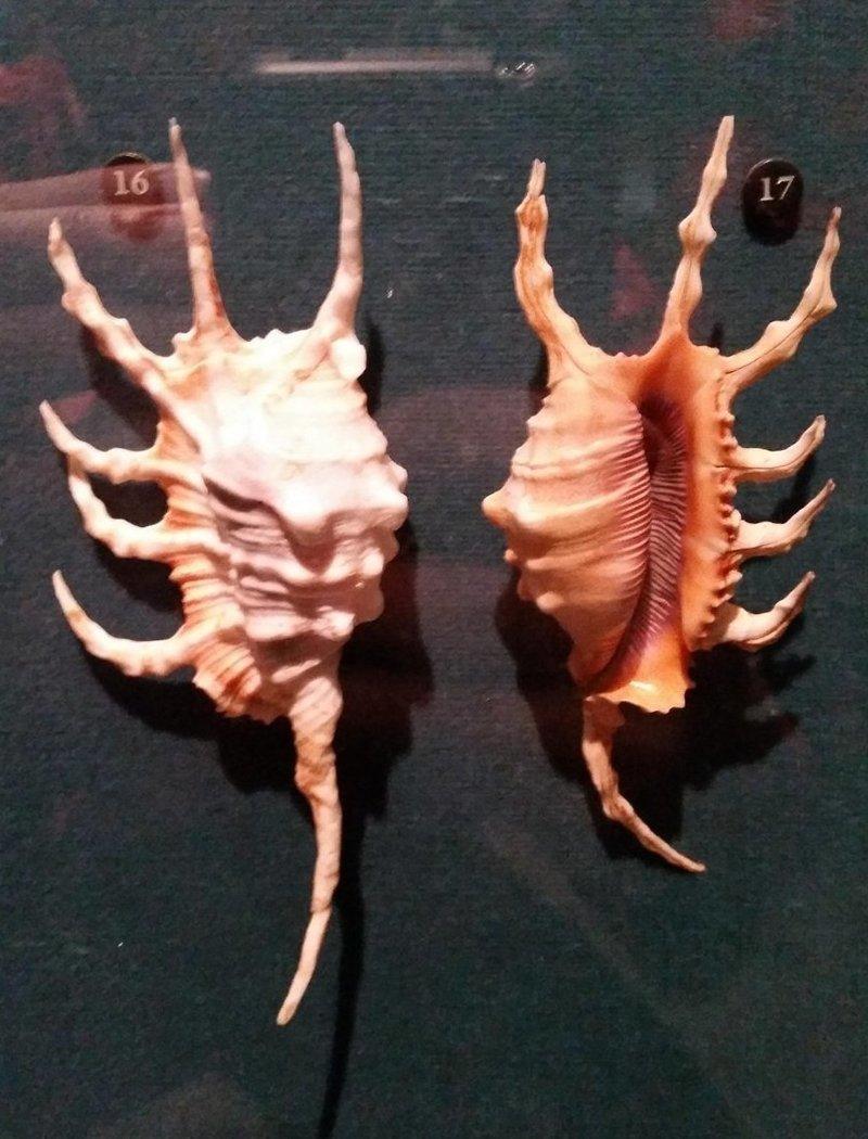 13. В музее написано, что это ракушки, но выглядят они скорее как лапищи инопланетных существ Жуткие фото, жуткое, подборка, странные фото, страшно, фото, фотошоп, шок