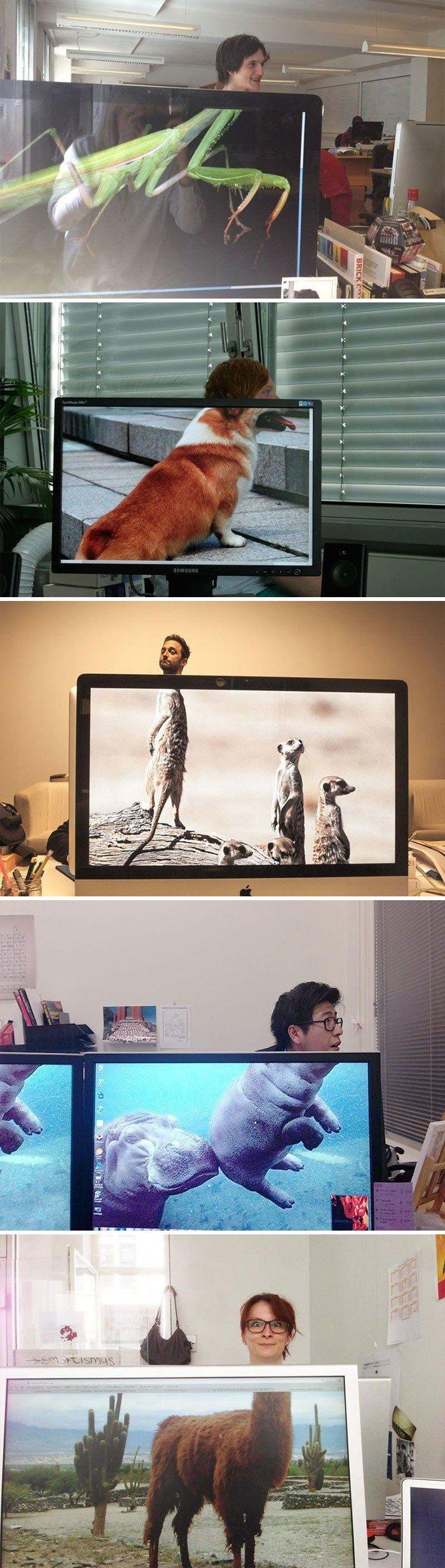 Свой зоопарк заставка, идея, монитор, обои, подборка, рабочий стол, фон, фотография