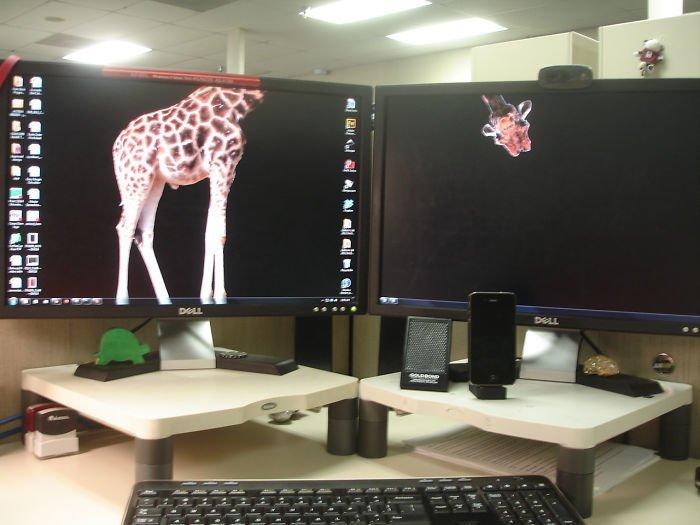 Жираф поместился заставка, идея, монитор, обои, подборка, рабочий стол, фон, фотография