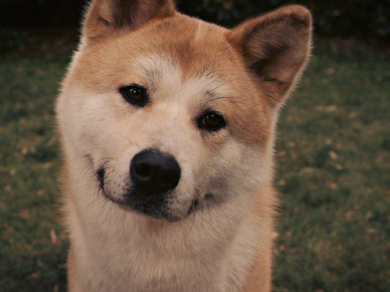 Хатико: Самый верный друг (2009) интересно, кино, фильм