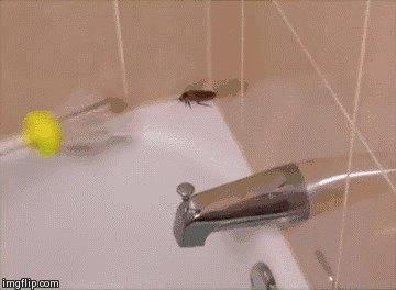 вызывайте дезинсектора, прикол, таракан, тараканы, усатые, фу-у-у-у-у-у, юмор