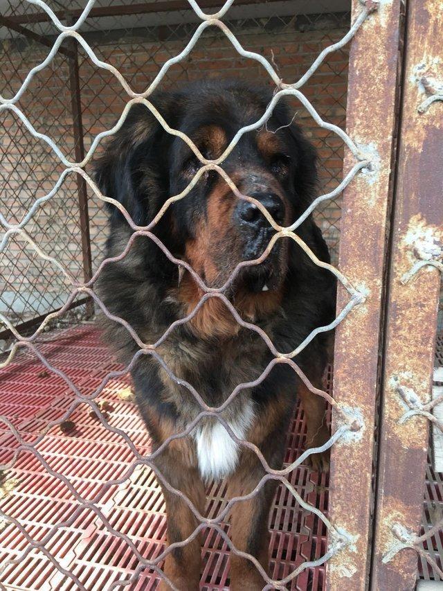 Спасатели не могли поверить в то, что пес самой дорогой породы в мире оказался на мясной ферме история, собака, спасение
