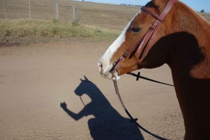Конь-огонь! Что происходит, веселые картинки, забавно, загадочно, приколы, смешно, фото, фотографии