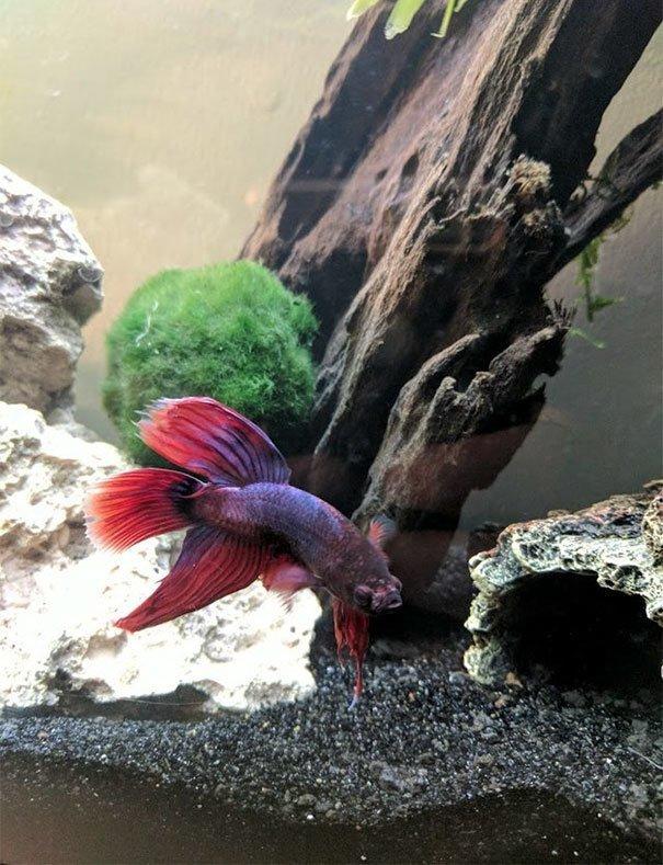 Виктория назвала рыбку Арго в честь корабля из древнегреческой мифологии  животные, жизнь, зоомагазин, история, рыба, спасение, фото
