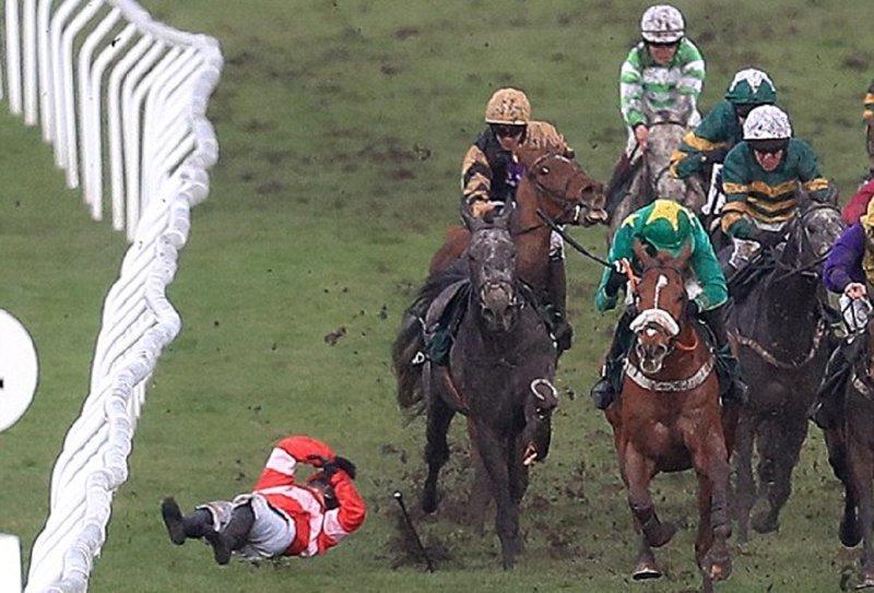 Трагедия в Челтенхэме: лошадь, сломавшую ногу на скачках, пришлось усыпить Челтенхэм, великобритания, гибель животного, животные, лошади, скаковые лошади, скачки, травмы