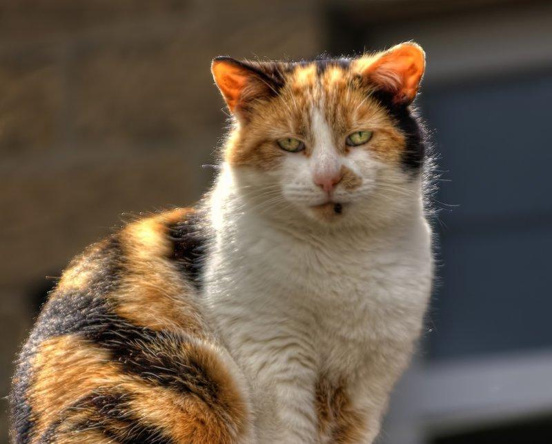 Очень колоритные уличные коты город, домашние животные, кот, кошки, улица, эстетика
