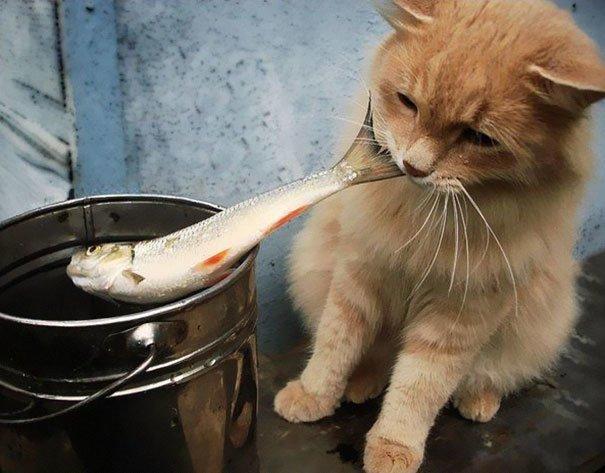 Коты-воришки воришка, кот, юмор