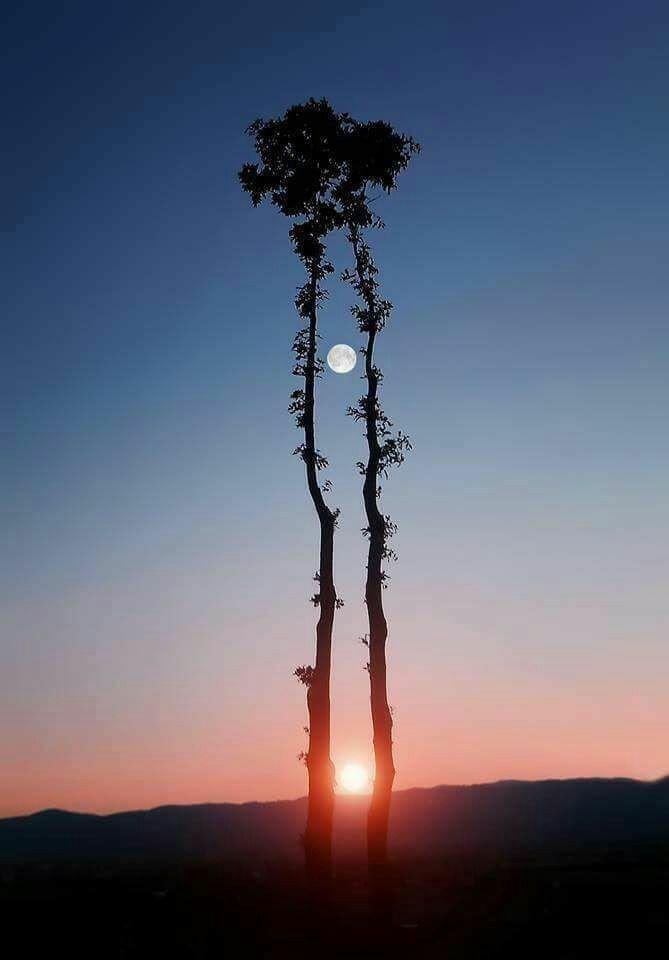 Солнце и Луна день, животные, кадр, люди, мир, снимок, фото, фотоподборка