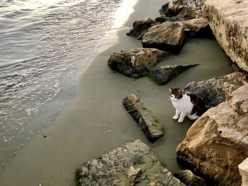 Кот у моря день, животные, кадр, люди, мир, снимок, фото, фотоподборка