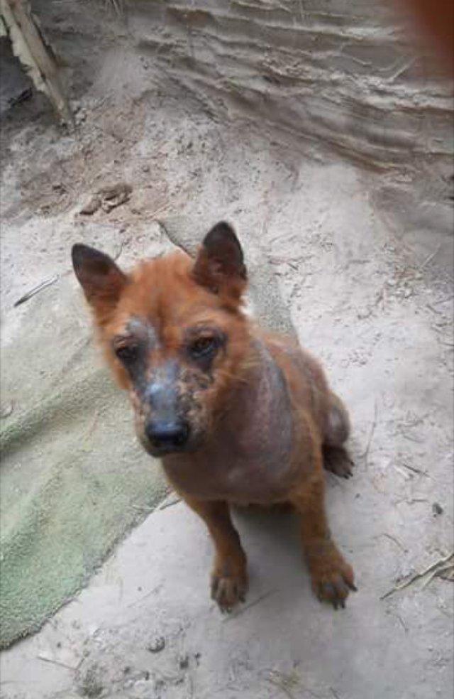 Солис поняла, что одной ей не справиться с проблемами этого пса, и связалась с местным спасателем животных Бекки Модером в мире, добро, животные, люди, собака, спасение