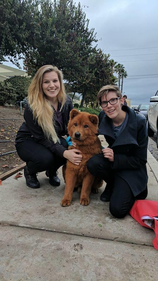 Эллиота переправили в Сан-Диего, где этот красавчик сразу нашёл хороших хозяев в мире, добро, животные, люди, собака, спасение