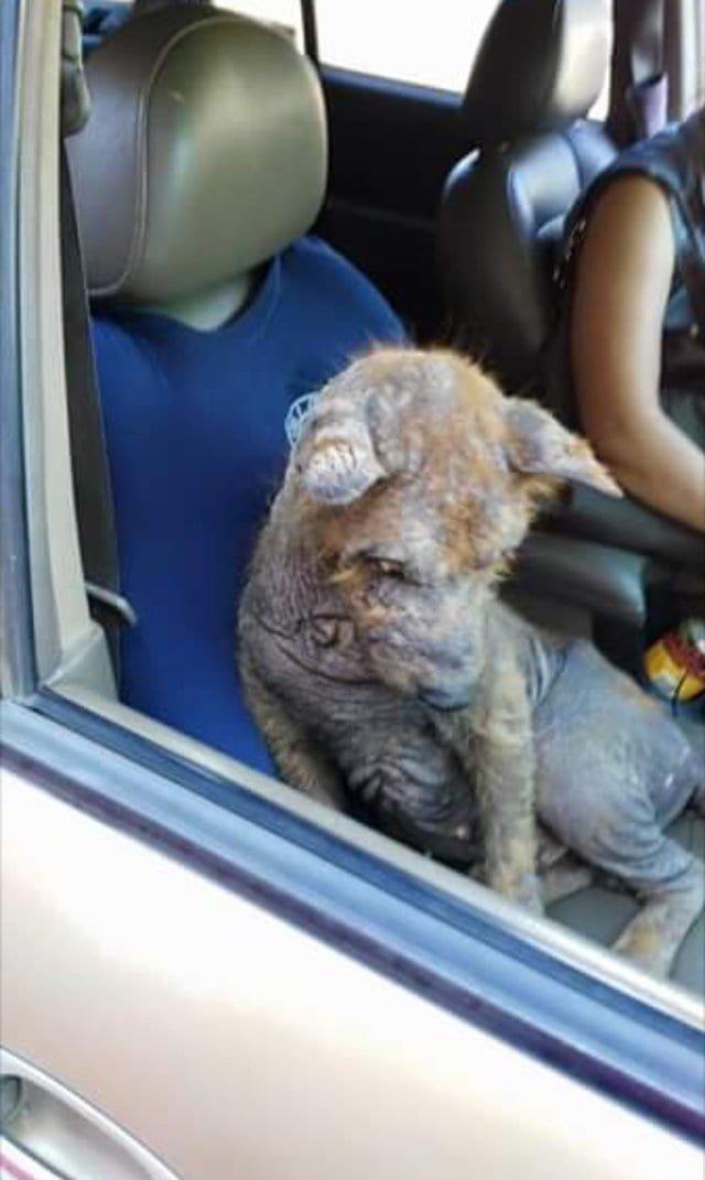 Мексиканка Карла Солис нашла под своей машиной больного напуганного пса и решила спасти бедное животное в мире, добро, животные, люди, собака, спасение