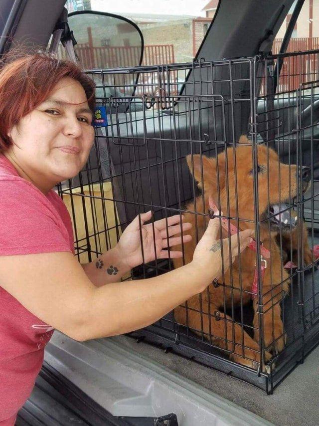 Женщина нашла под своей машиной напуганного лысого пса и решила спасти бедное животное в мире, добро, животные, люди, собака, спасение