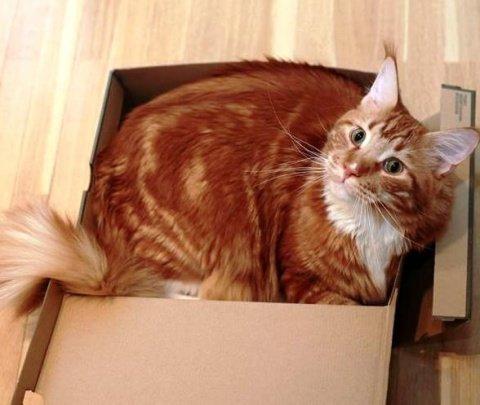 Увидел ветеринар нашего котика и перекрестился. Впервые, говорит, вижу брюхоногого кота история, кошки, смешно