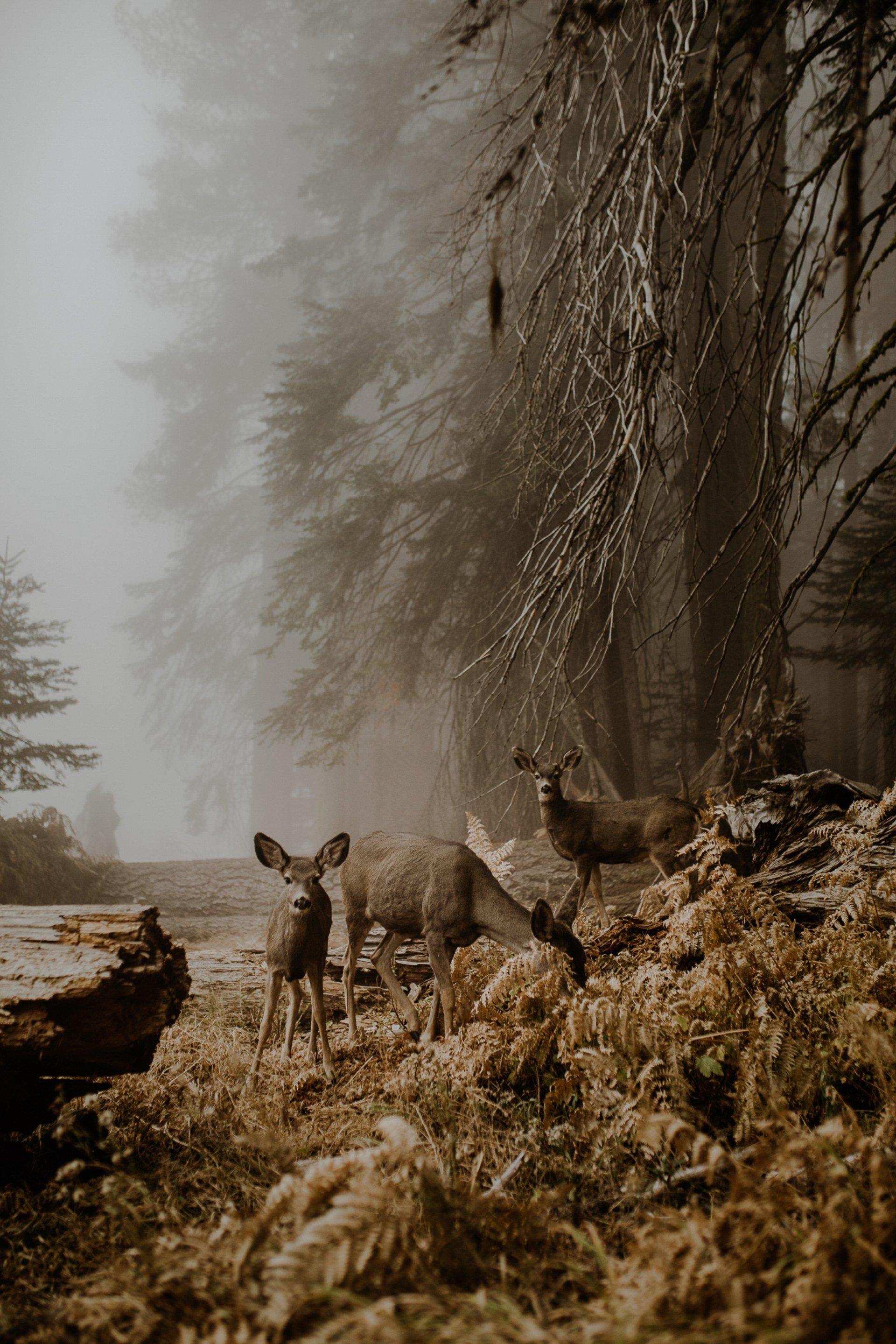 """В национальном парке """"Секвойя"""", США. Фотограф - Джастина Жданчик Sony World Photography, Sony World Photography Awards 2018, лауреаты, лучшие фото, лучшие фотографии, победители, победители конкурса, фотоконкурс"""