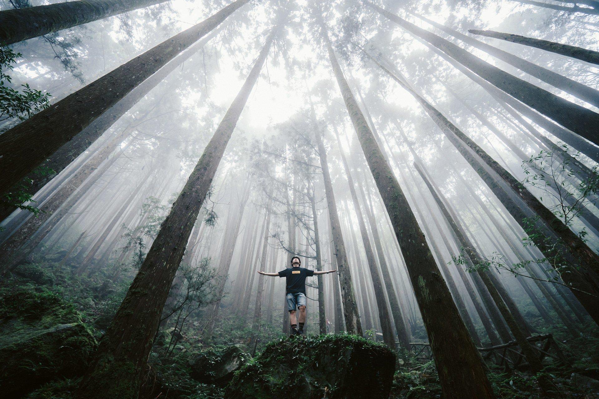 Лесная сказка, Тайвань. Фотограф - Ланце Хаунг Sony World Photography, Sony World Photography Awards 2018, лауреаты, лучшие фото, лучшие фотографии, победители, победители конкурса, фотоконкурс