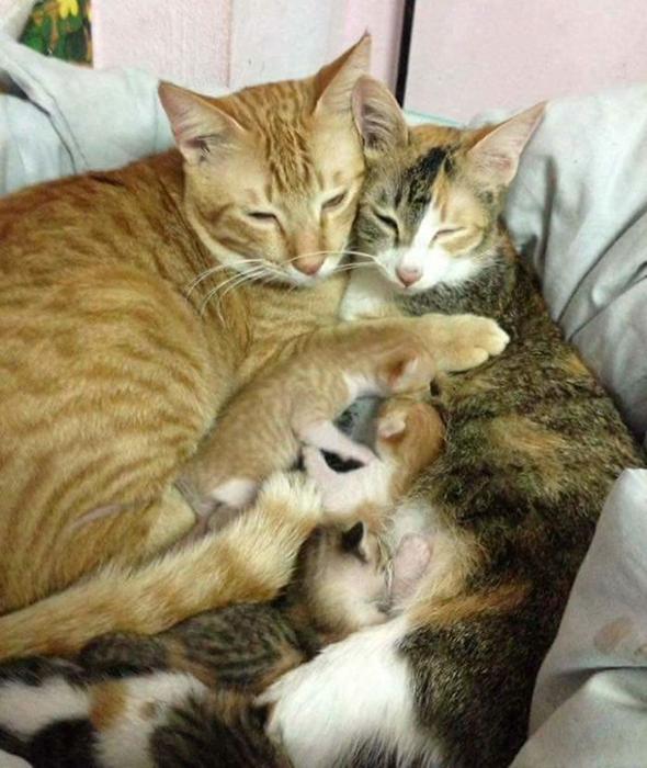 Кот отец все время находился рядом и поддерживал маму кошку история, кошки, фотографии