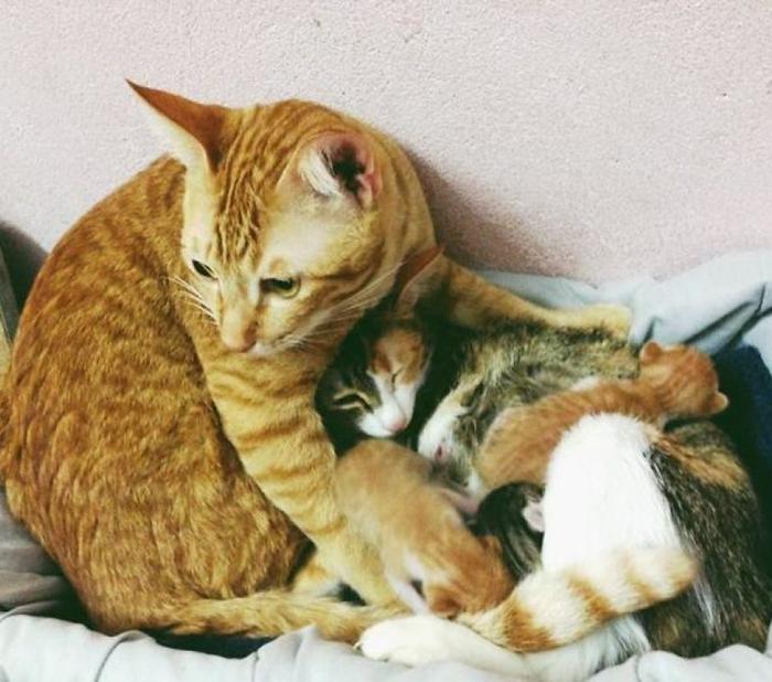 Кот поддержал кошку во время родов и покорил тысячи сердец история, кошки, фотографии