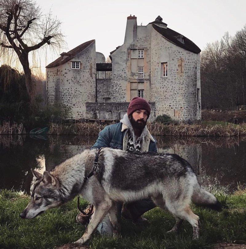 Волкособы: отличные питомцы для тех, кому мало обычных собак волк, волкособ, животные, питомцы, собака