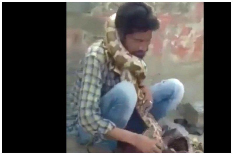 Питон во время уличного представления чуть не придушил заклинателя змей заклинание змей, индия, питон, представление, трагедия, удушение, уличное шоу