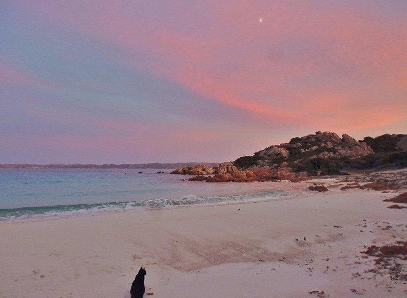 В сезон отпусков остров Буделли встречает более 1300 туристов  Буделли, Моранди, жизнь, италия, мир, остров, отшельник, фотография