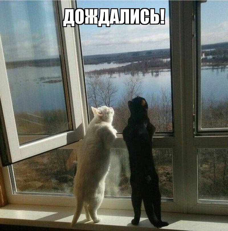 Субботний котопост картинки с надписями., смешные коты и кошки, фотоприколы