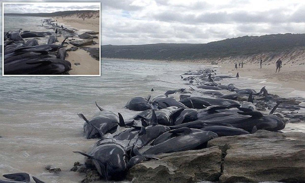 изображении ниже фото кита выбросившегося на берег этой рубрике обычно