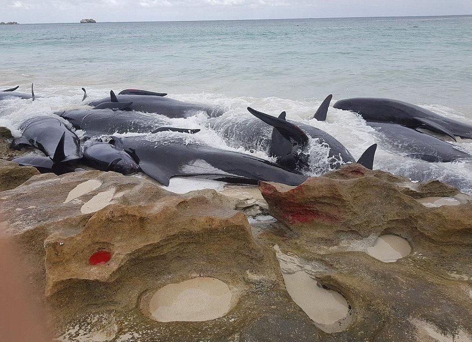 такие кит выбросился на берег картинка закуску