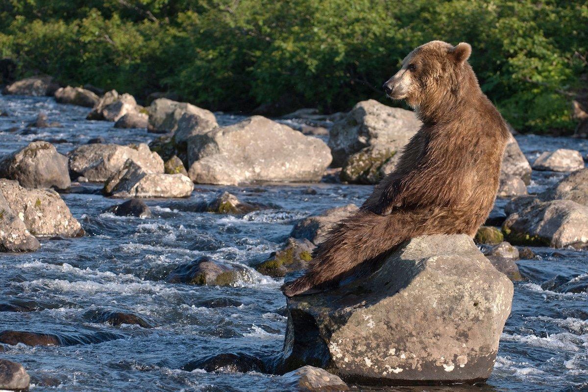 ряд фото картинки медведей камчатка порой