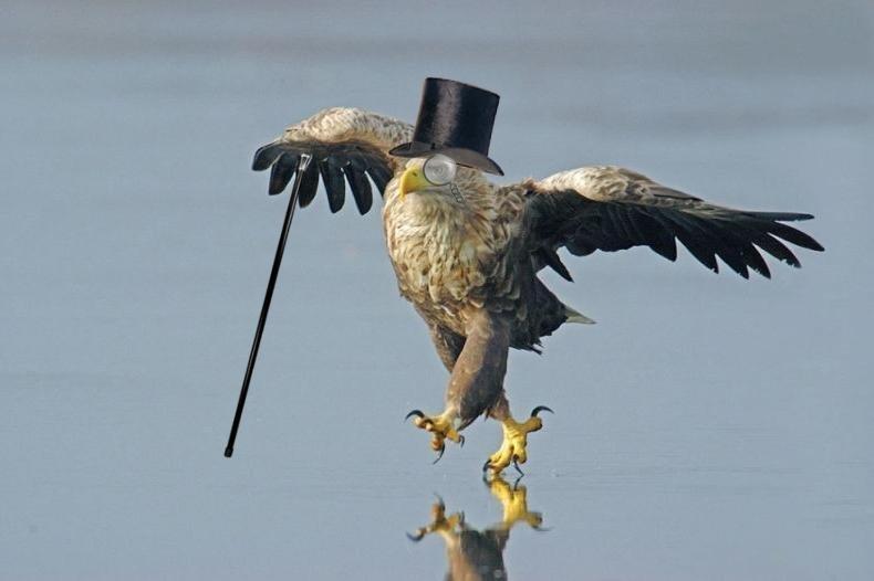 какие многочисленных фото приколы про орлов картинки отобрали для