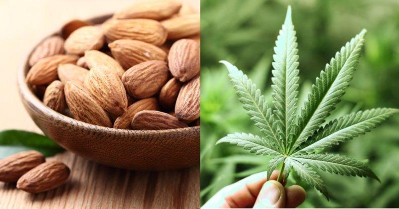 5 веществ родом из альтернативной медицины, которые попали в опалу лекарства, медицина, парацетамол, рак, цианид