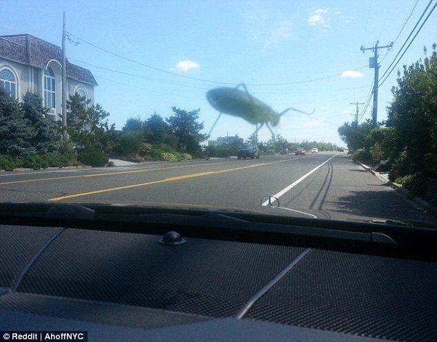 Нашествие гигантских тараканов Забавные фото, оптические иллюзии, подборка, показалось, приколы, смешно, фото, юмор