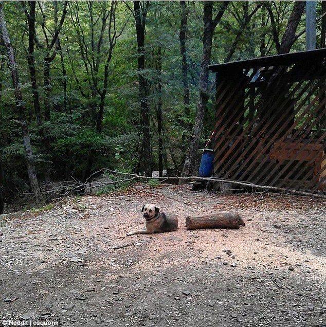 Эта собака - умелый иллюзионист Забавные фото, оптические иллюзии, подборка, показалось, приколы, смешно, фото, юмор
