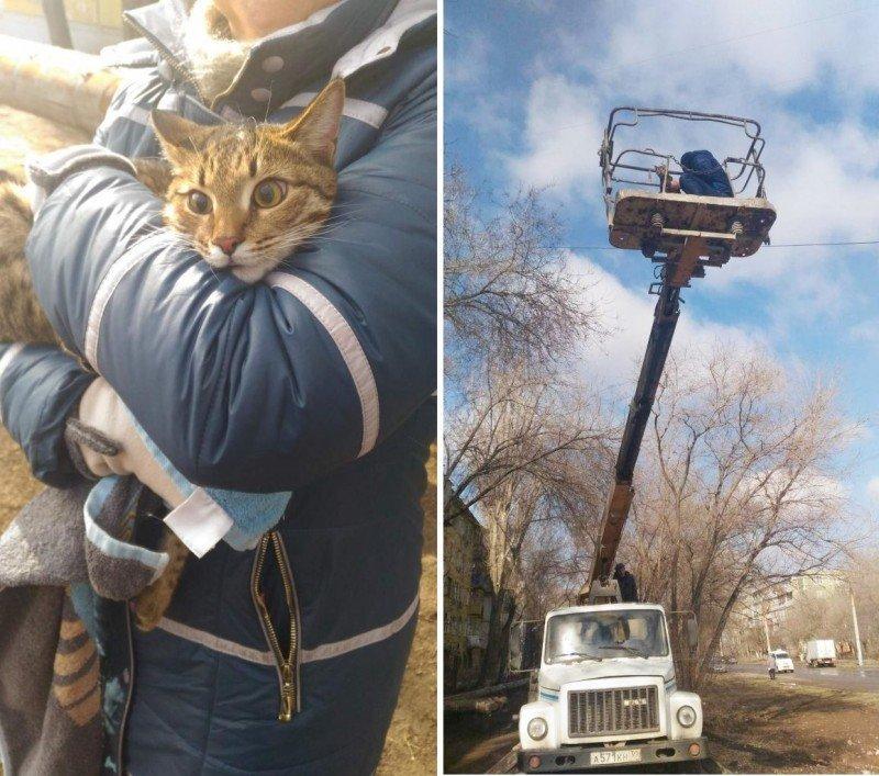 В Астрахани всем миром спасли кота, просидевшего неделю на дереве истории, кошки, спасение